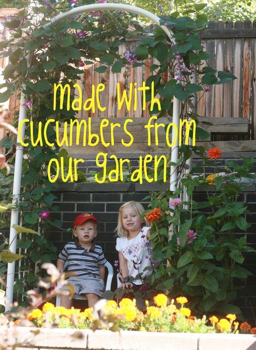 Cucumbers from garden